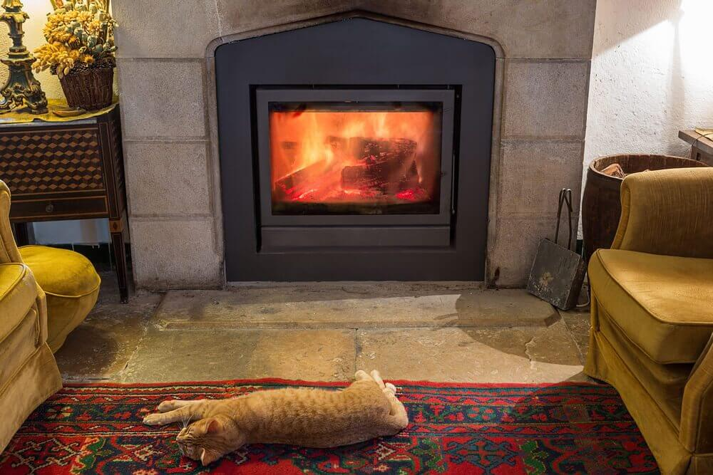 Cat sleeps on warm carpet in front of fire