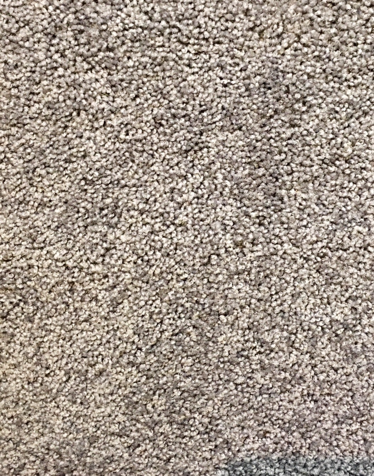 Mountain Moods 100 Nylon Carpet Stain Resistant 0420carpet
